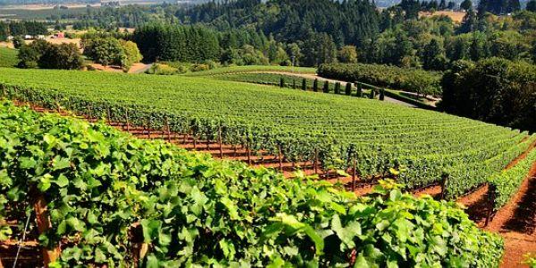 Sadjarstvo in vinogradništvo